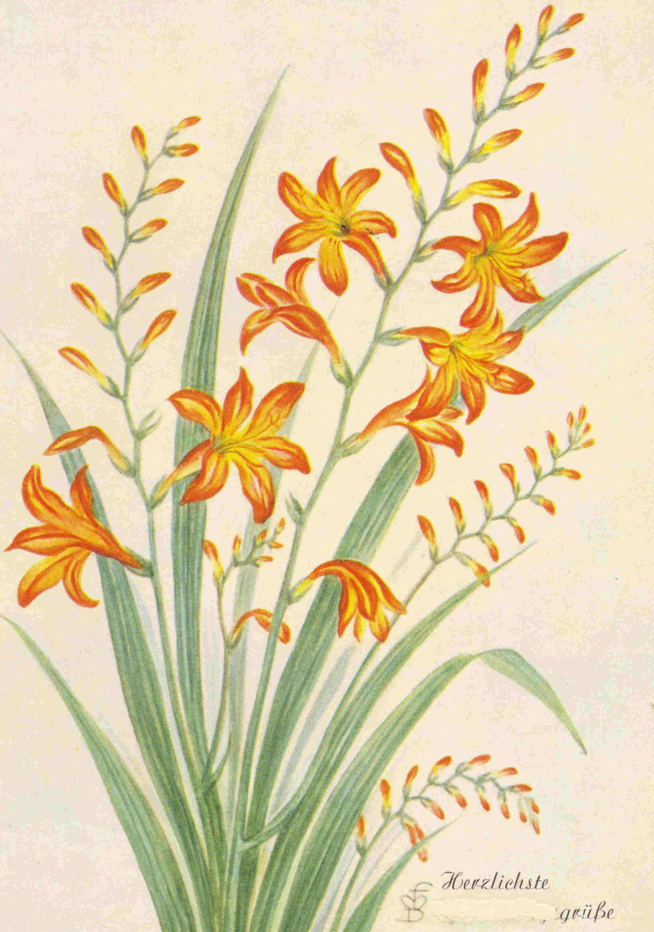 Pin dessin fleur lys bouquet fleurs tropicales ajilbabcom for Bouquet de lys