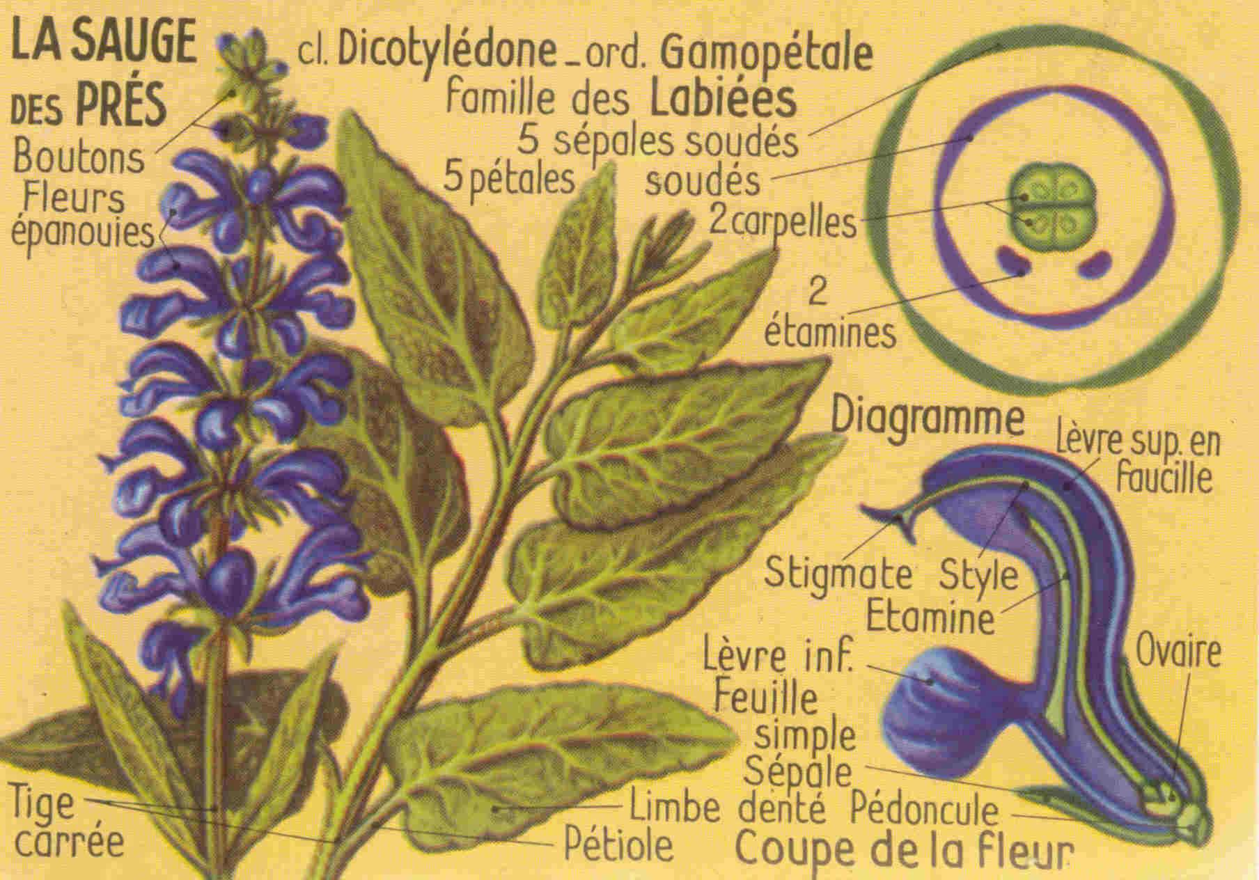 Botanique for Plante whisky